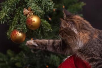 Wie wird Weihnachten auf der ganzen Welt gefeiert